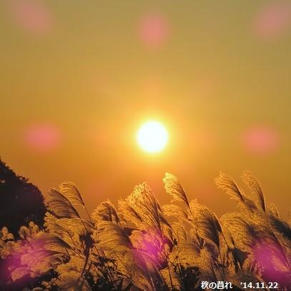 f:id:mikawakinta63:20141122162341j:image