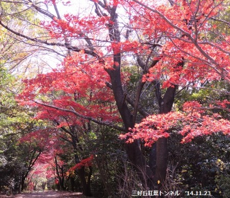 f:id:mikawakinta63:20141123102221j:image
