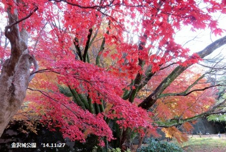 f:id:mikawakinta63:20141127104806j:image