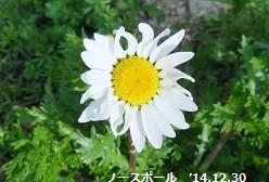 f:id:mikawakinta63:20141230103240j:image:left