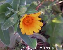 f:id:mikawakinta63:20141230103452j:image:right