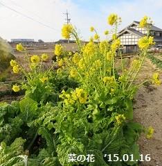 f:id:mikawakinta63:20150114085235j:image:right