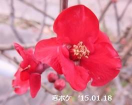 f:id:mikawakinta63:20150117164849j:image:left