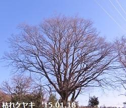 f:id:mikawakinta63:20150118103019j:image:right