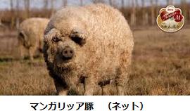 f:id:mikawakinta63:20150120204428p:image:left