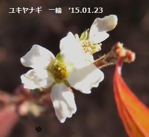 f:id:mikawakinta63:20150123105704j:image:left