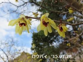 f:id:mikawakinta63:20150128212233j:image:right