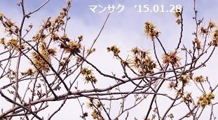 f:id:mikawakinta63:20150128214042j:image:left