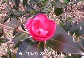f:id:mikawakinta63:20150130170029j:image:right