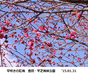 f:id:mikawakinta63:20150201200117j:image:left