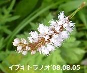 f:id:mikawakinta63:20150203205337j:image:left