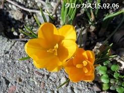 f:id:mikawakinta63:20150206134751j:image:right