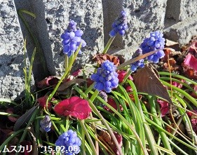 f:id:mikawakinta63:20150206144150j:image:left