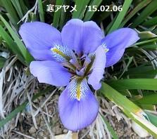 f:id:mikawakinta63:20150206150356j:image:right