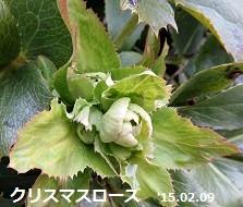 f:id:mikawakinta63:20150212165222j:image:left