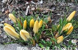 f:id:mikawakinta63:20150213142227j:image:right