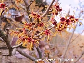 f:id:mikawakinta63:20150218165157j:image:left