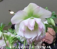 f:id:mikawakinta63:20150219195435j:image:left