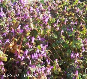 f:id:mikawakinta63:20150220140521j:image:left