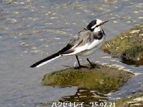 f:id:mikawakinta63:20150224141048j:image:left