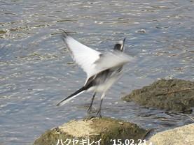 f:id:mikawakinta63:20150224144220j:image:right