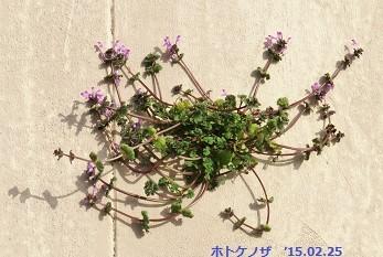 f:id:mikawakinta63:20150225161632j:image:right