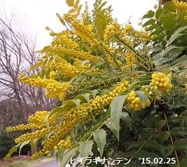 f:id:mikawakinta63:20150225171402j:image:left