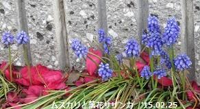 f:id:mikawakinta63:20150225180255j:image:right