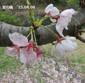 f:id:mikawakinta63:20150408150945j:image:left