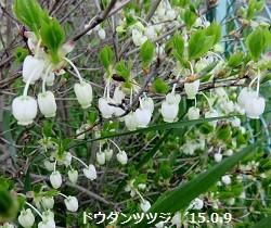 f:id:mikawakinta63:20150409193421j:image:left