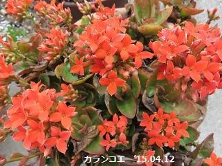 f:id:mikawakinta63:20150414153433j:image:left
