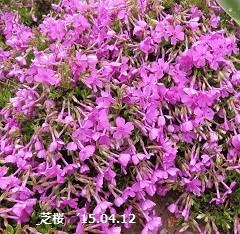 f:id:mikawakinta63:20150414153944j:image:left