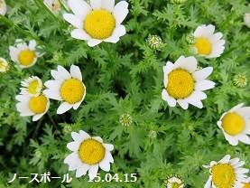 f:id:mikawakinta63:20150415112000j:image:left