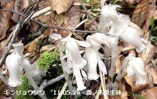 f:id:mikawakinta63:20150419221056j:image:left