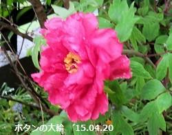 f:id:mikawakinta63:20150420154858j:image:right