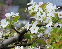 f:id:mikawakinta63:20150422054704j:image:right