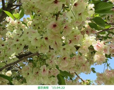 f:id:mikawakinta63:20150422195535j:image