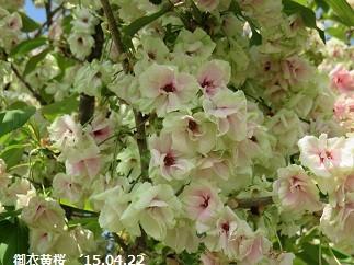 f:id:mikawakinta63:20150422211519j:image:right