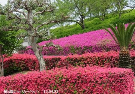 f:id:mikawakinta63:20150424175427j:image