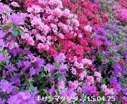 f:id:mikawakinta63:20150426205227j:image:right