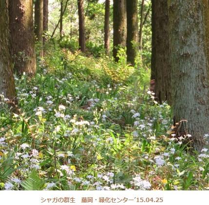f:id:mikawakinta63:20150428144352j:image