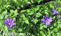 f:id:mikawakinta63:20150429213950j:image:right
