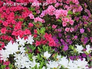 f:id:mikawakinta63:20150430142856j:image:right