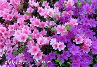 f:id:mikawakinta63:20150430180844j:image:left