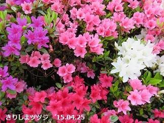 f:id:mikawakinta63:20150502152811j:image:right