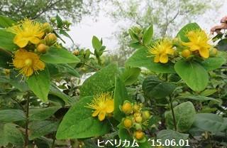 f:id:mikawakinta63:20150601141115j:image:right