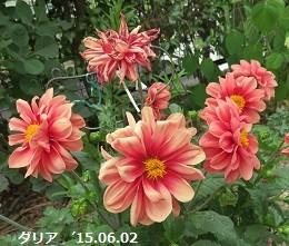 f:id:mikawakinta63:20150602201139j:image:left