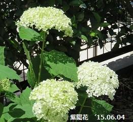 f:id:mikawakinta63:20150604200625j:image:right