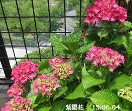 f:id:mikawakinta63:20150604210707j:image:left