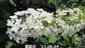 f:id:mikawakinta63:20150605171427j:image:right